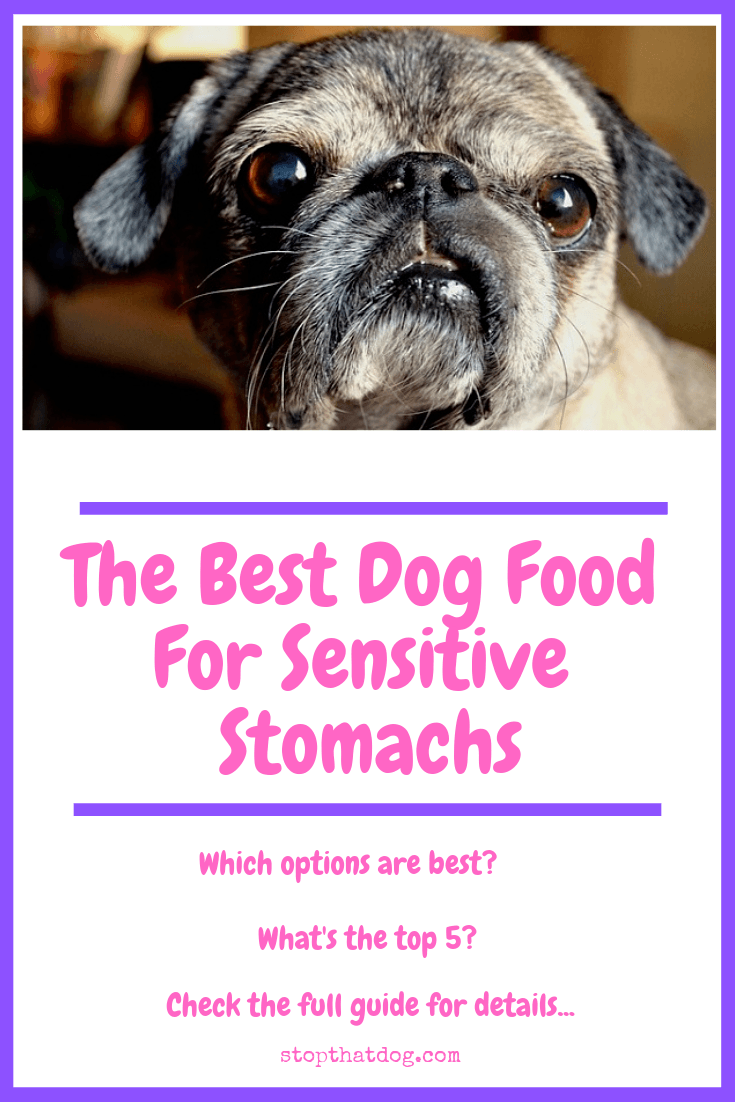 What's The Best Dog Food For Sensitive Stomachs?