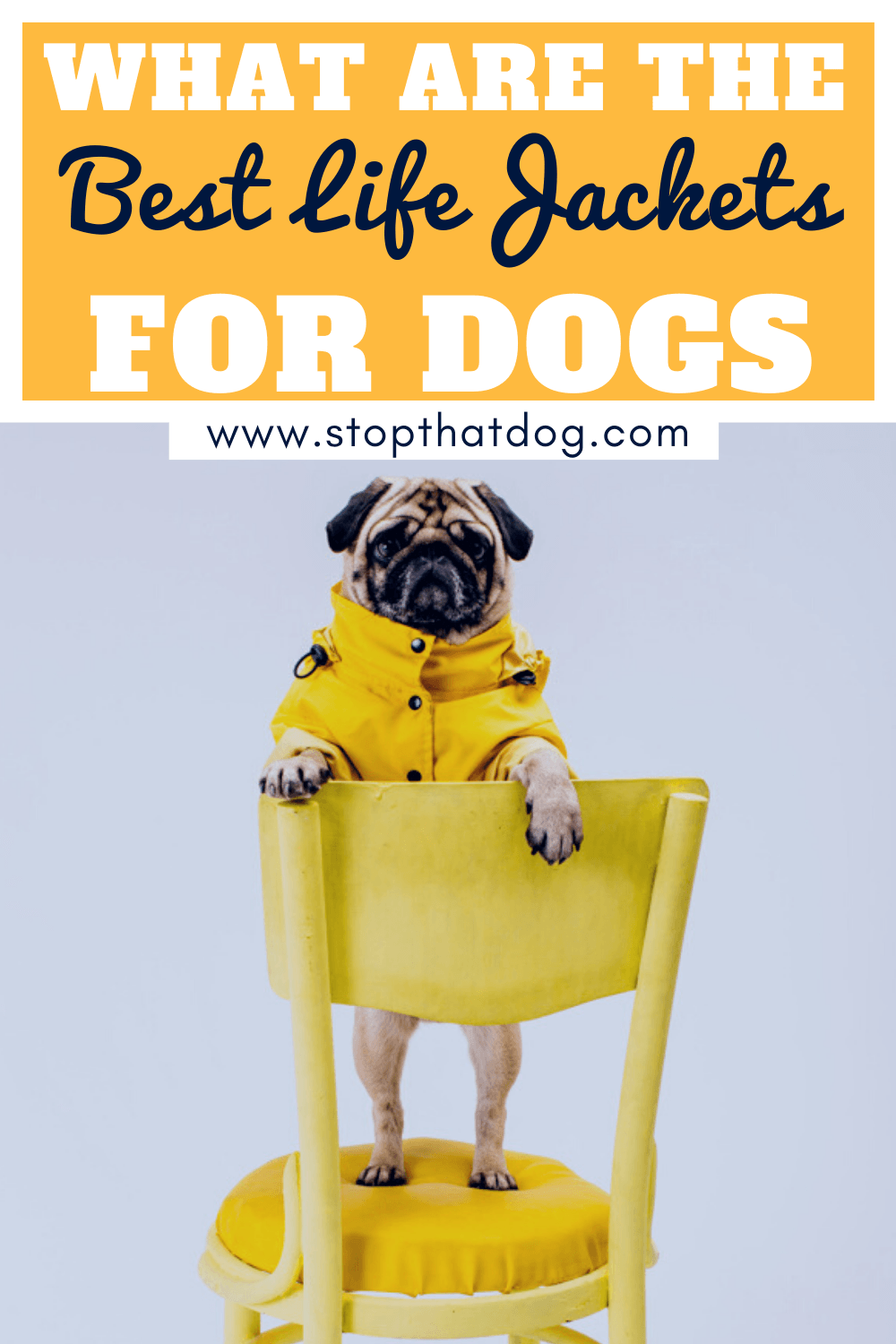 What\'s The Best Life Jacket For Dogs?