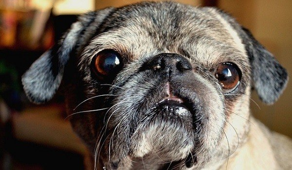 What's The Best Dog Food For Sensitive Stomachs? 1