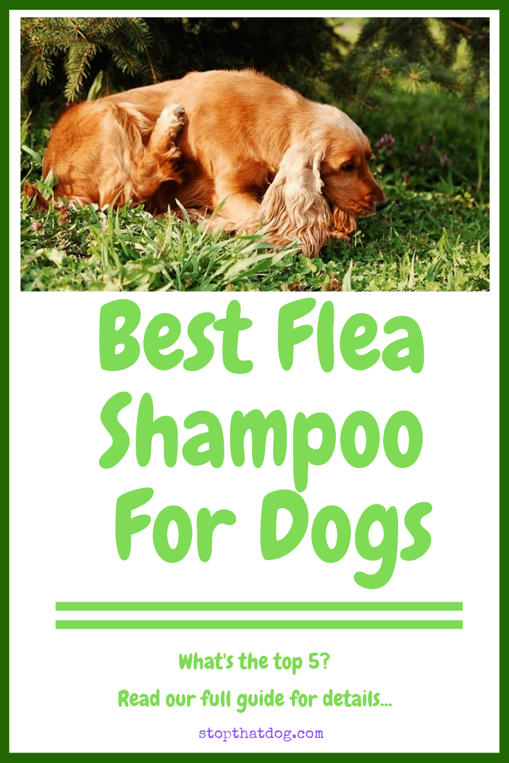 What\'s The Best Flea Shampoo For Dogs?
