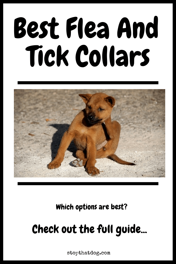 What's The Best Flea Collar For Dogs In 2020? Your Ultimate Guide