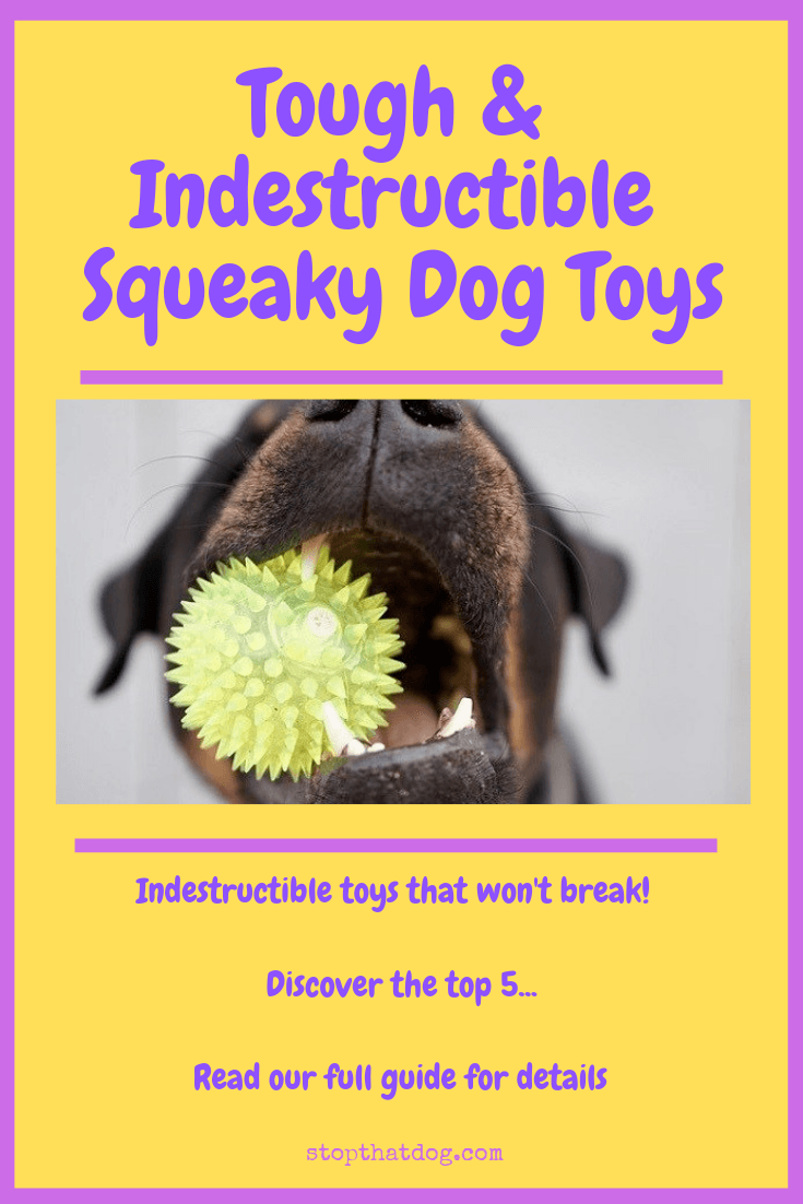 What Are The Best Indestructible Squeaky Dog Toys?