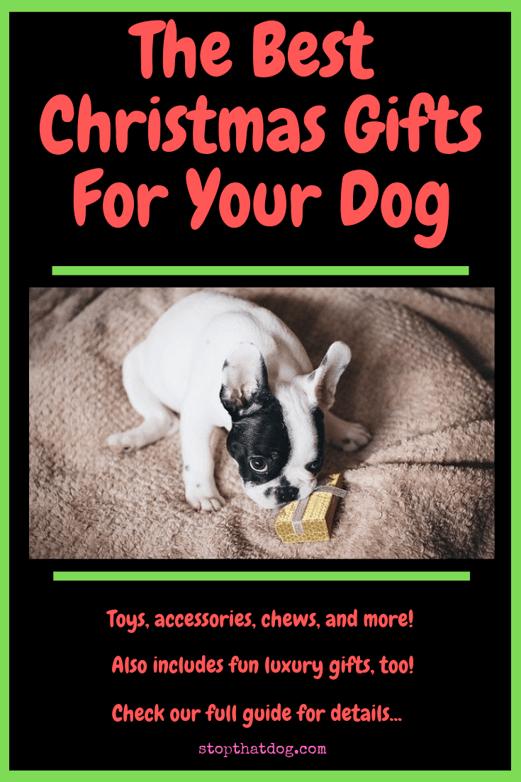 The Best Christmas Gifts For Your Dog - An In-Depth Guide