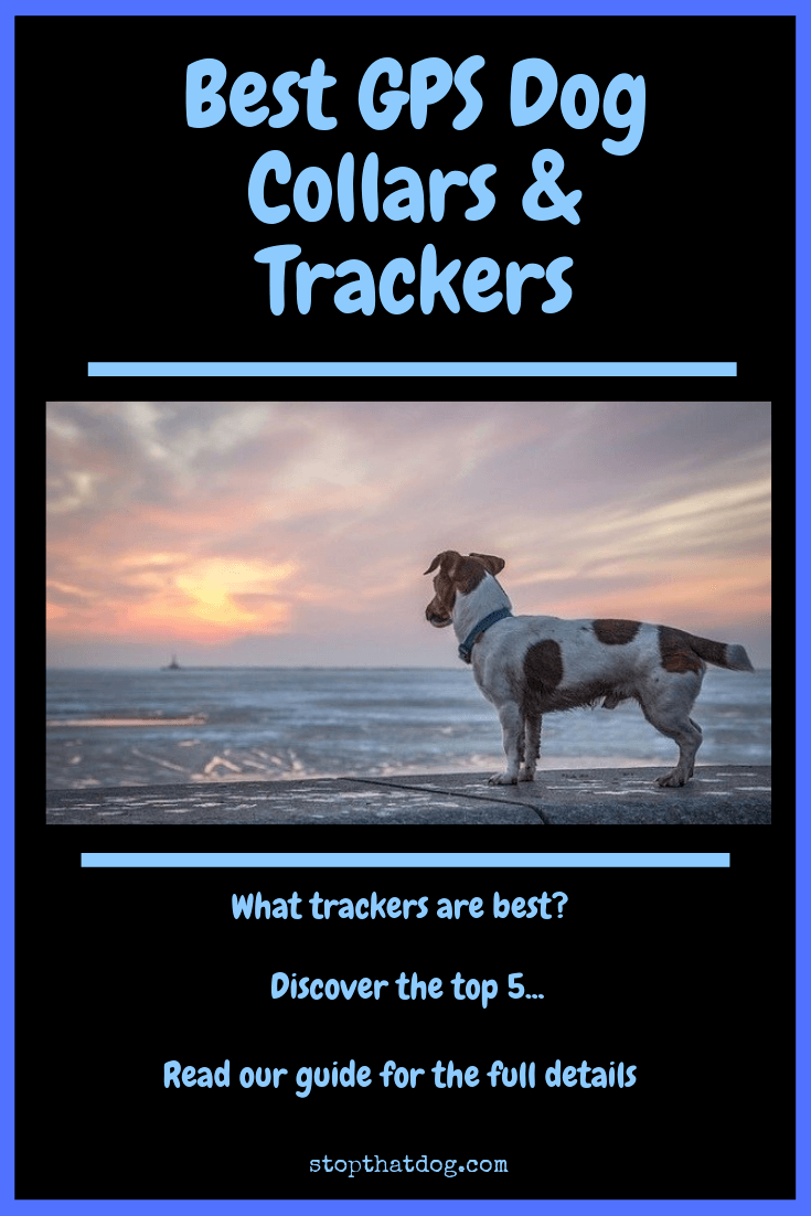 What Are The Best GPS Dog Collars & Trackers? The Ultimate Guide