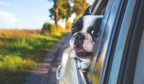 How To Keep Your Dog Safe And Secure In The Car 12