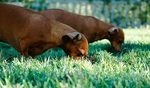 Why Is My Dog Eating Grass? Causes & Solutions 8