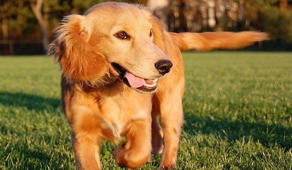 How To Run With Your Dog - An In-Depth Guide 10