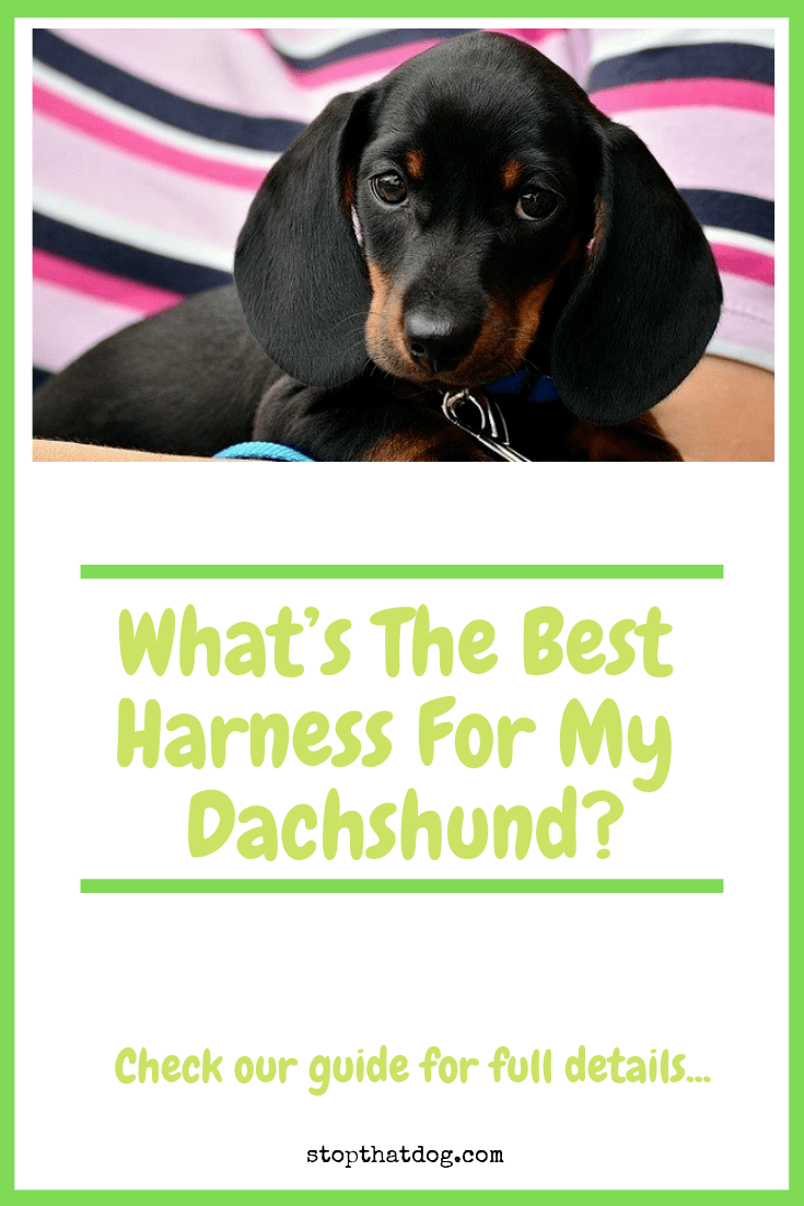 What\'s The Best Harness For My Dachshund? A Few Top Picks