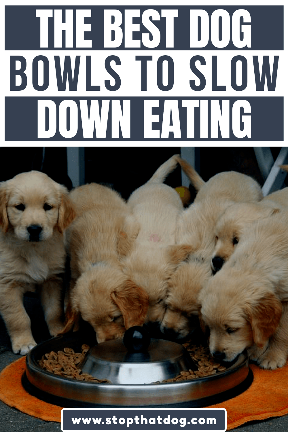 What's The Best Slow Feeder Dog Bowl To Slow Eating & Prevent Bloat Or Vomiting?