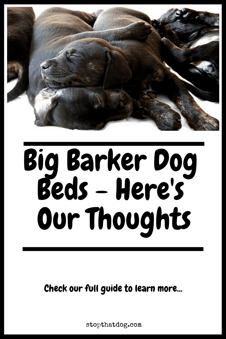 Are Big Barker Dog Beds Any Good? Here's Our Thoughts