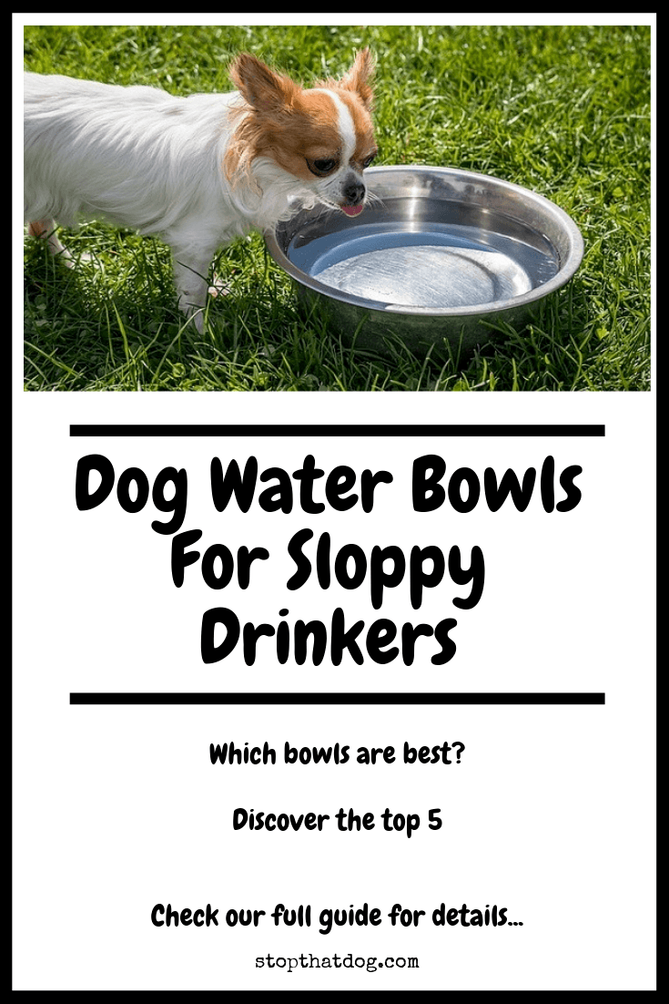 What's The Best Dog Water Bowl For Sloppy Drinkers?