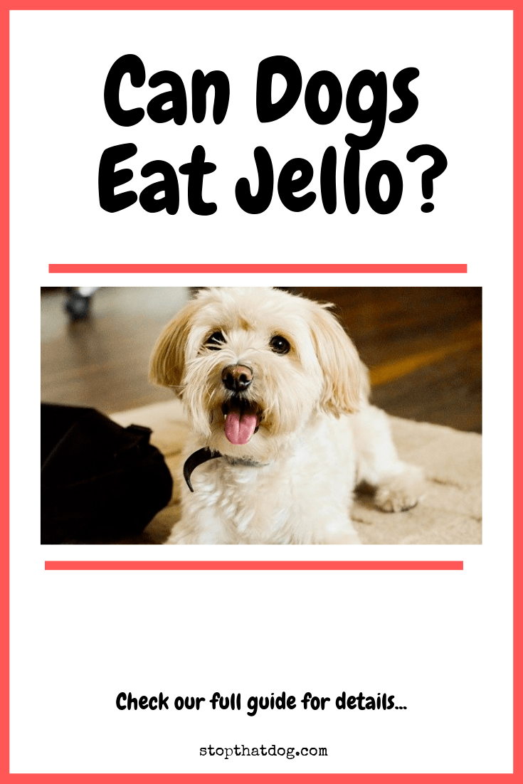 Can Dogs Eat Jello?