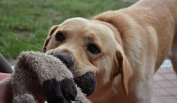Why Do Dogs Like Squeaky Toys? 1