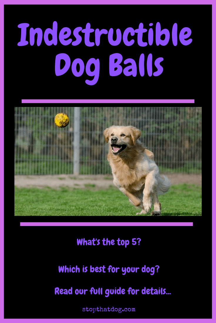 What Are The Best Indestructible Dog Balls? Your Ultimate Guide