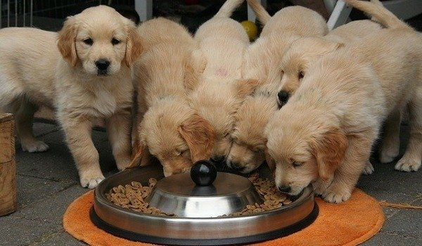 What's The Best Slow Feeder Dog Bowl To Slow Eating & Prevent Bloat Or Vomiting? 1