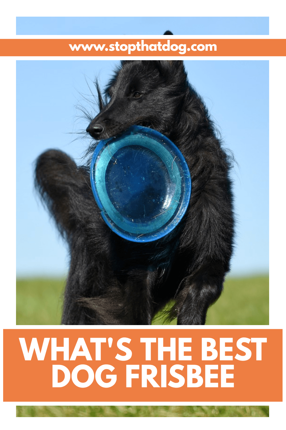 What Are The Best Dog Frisbees In 2020?