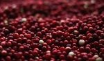 Can Dogs Eat Cranberries? 5
