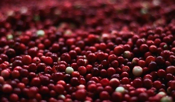 Can Dogs Eat Cranberries? 1