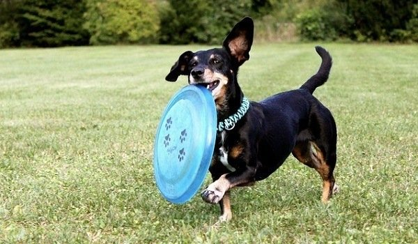 What Are The Best Dog Frisbees In 2020? 1
