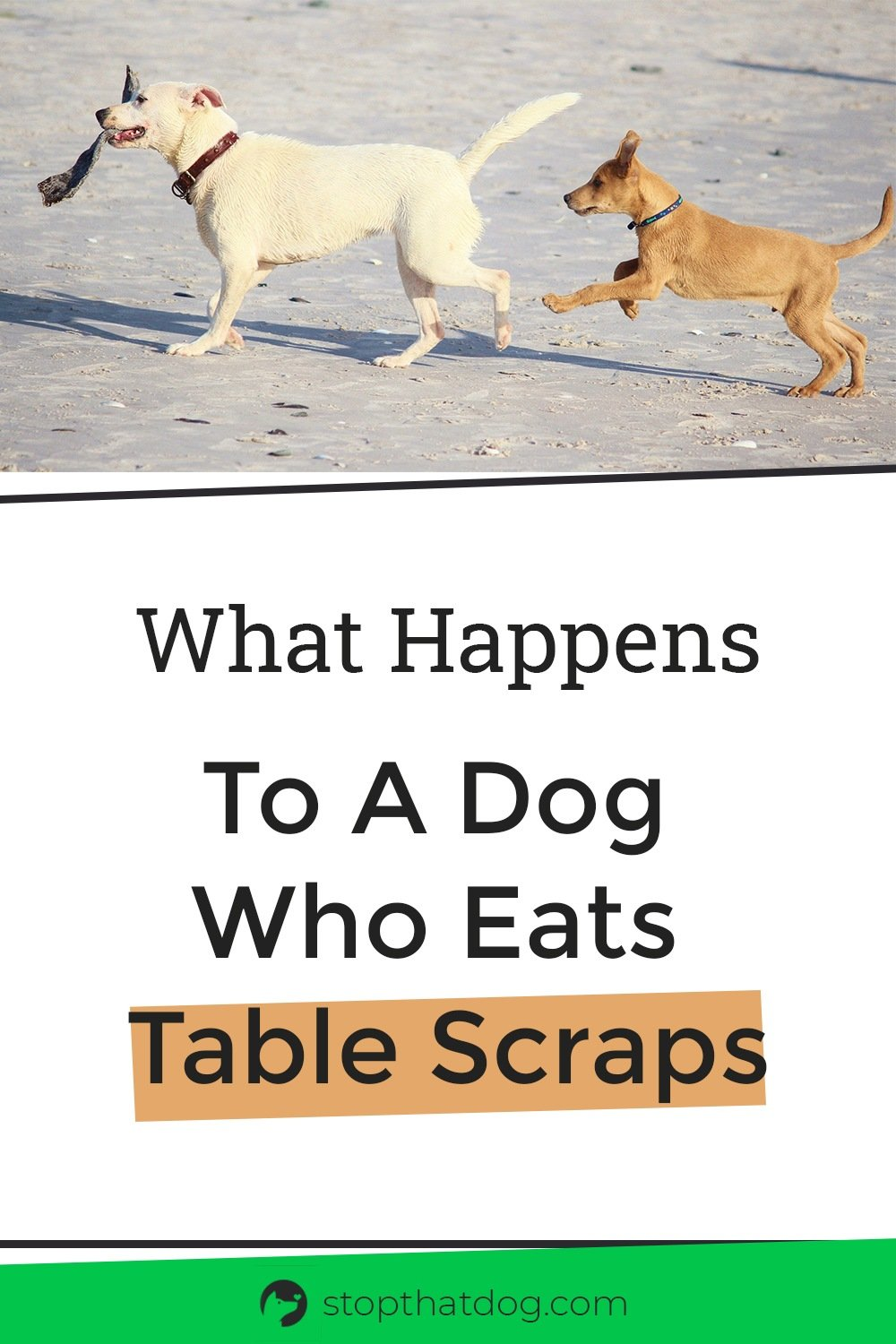 Can I Give Table Scraps To My Dog?