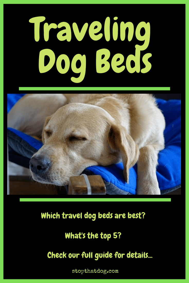 What's The Best Traveling Dog Bed? Our In-Depth Guide