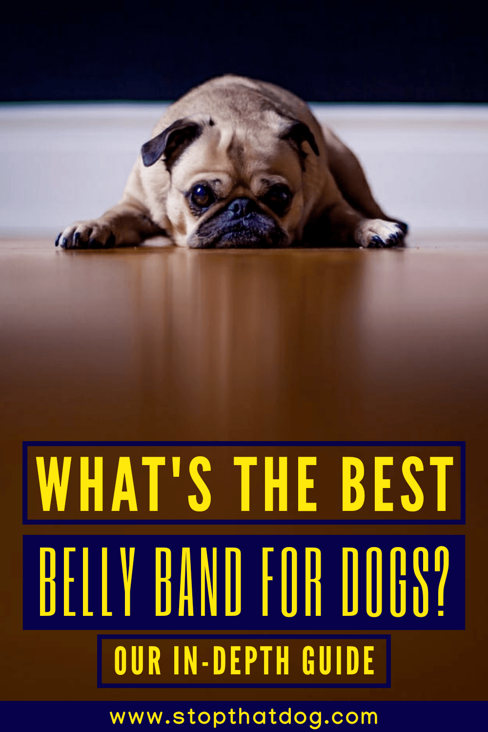 What's The Best Belly Band For Dogs? Our In-Depth Guide