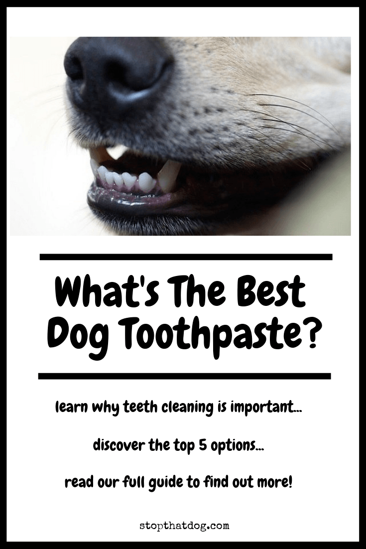 What\'s The Best Dog Toothpaste? Our Top Picks