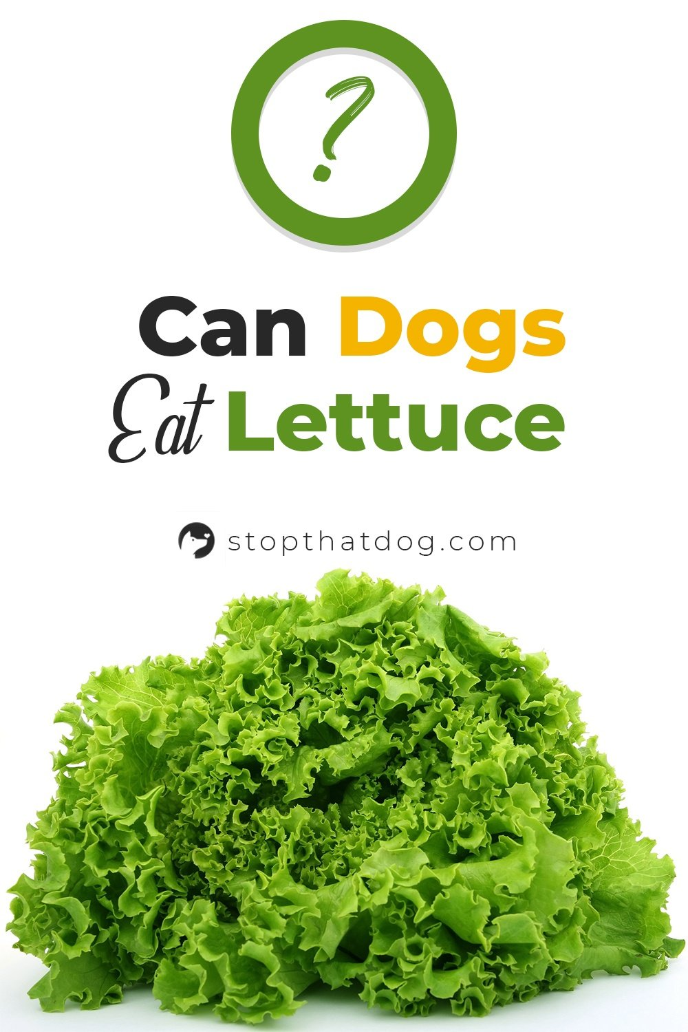 Can Dogs Eat Lettuce? Here's What You Should Know