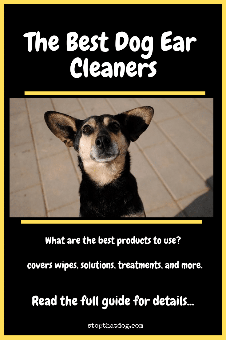 What's The Best Way To Clean My Dog's Ears? Your Detailed Guide