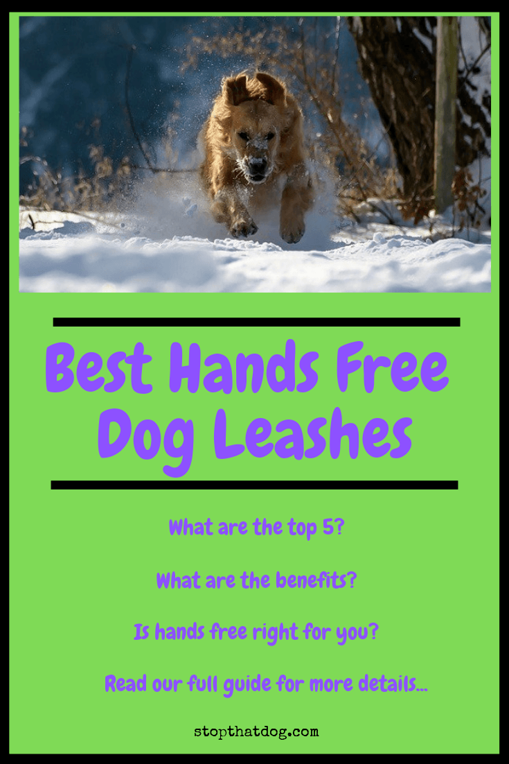 What\'s The Best Hands Free Dog Leash? Our Detailed Guide