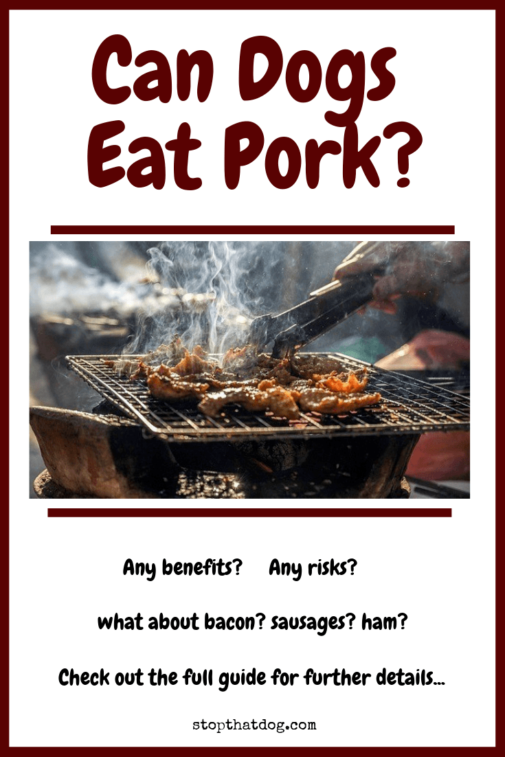 Can Dogs Eat Pork? Or Is Pork Bad For Dogs?