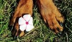 What's The Best Dog Paw Cleaner? Here's Our Top Picks (2020) 5