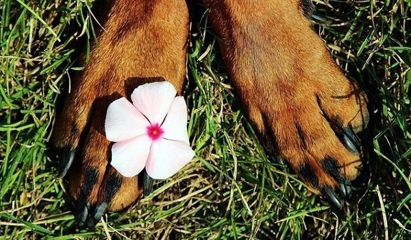What's The Best Dog Paw Cleaner? Here's Our Top Picks (2020) 1
