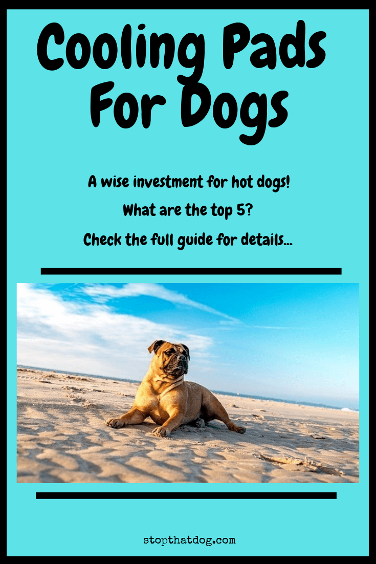 What\'s The Best Cooling Pad For My Dog? Here\'s Our Top Picks