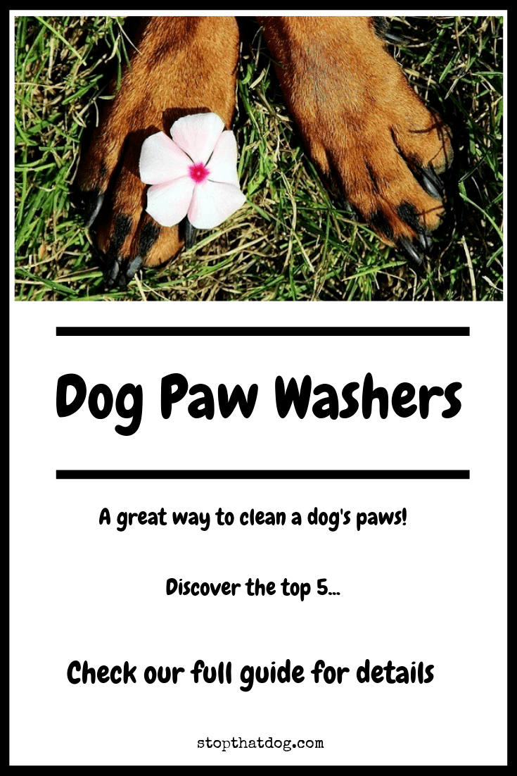 What's The Best Dog Paw Cleaner? Here's Our Top Picks (2020)
