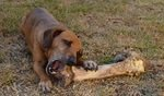 What Are The Best Bones For Dogs? The Ultimate Guide 5