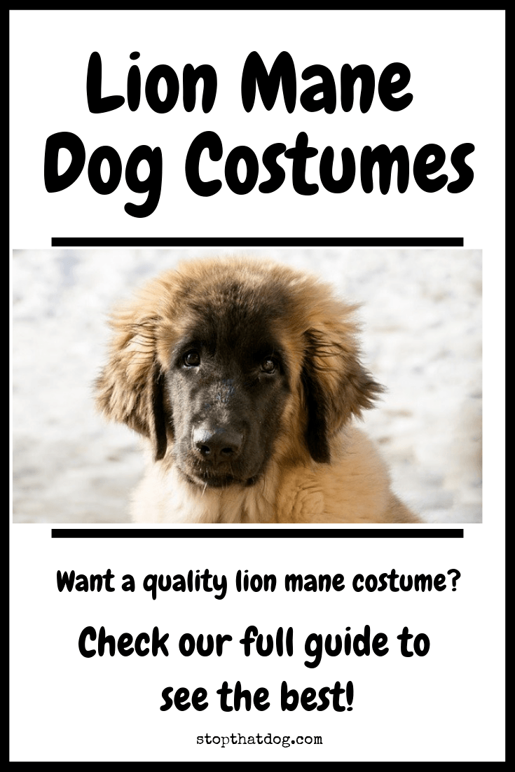 Where Can I Find A Lion Mane Dog Costume?