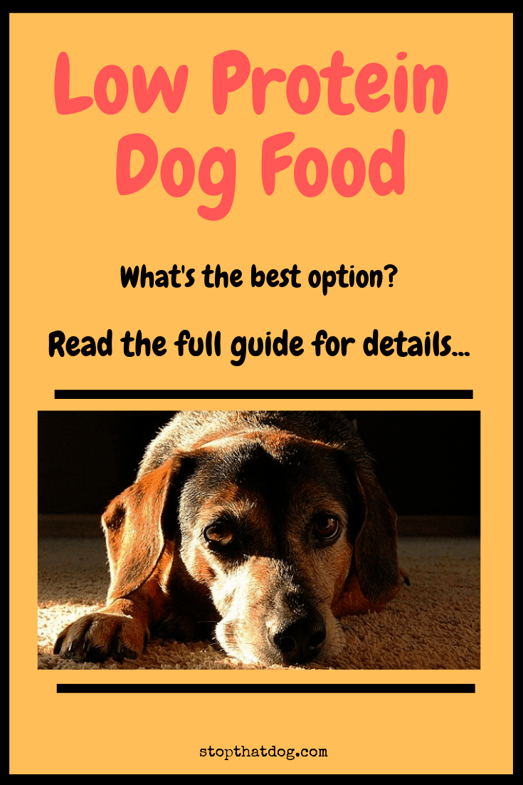 What\'s The Best Low Protein Dog Food & Does My Dog Need It?