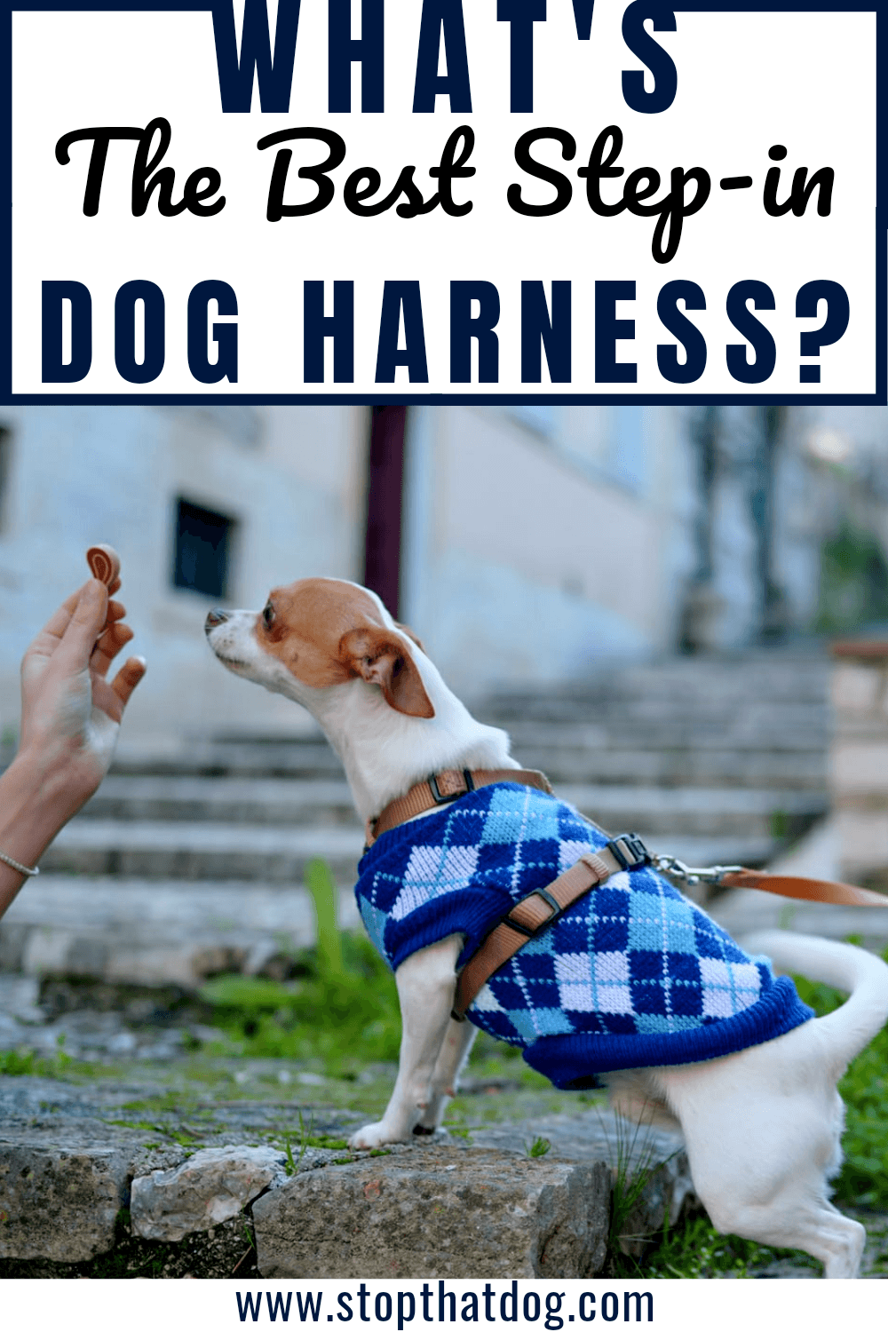 What\'s The Best Step-In Dog Harness?