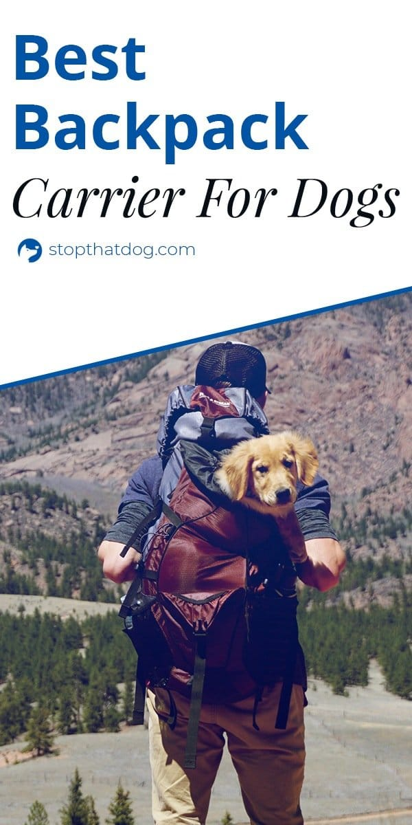 What's The Best Backpack Carrier For Dogs?