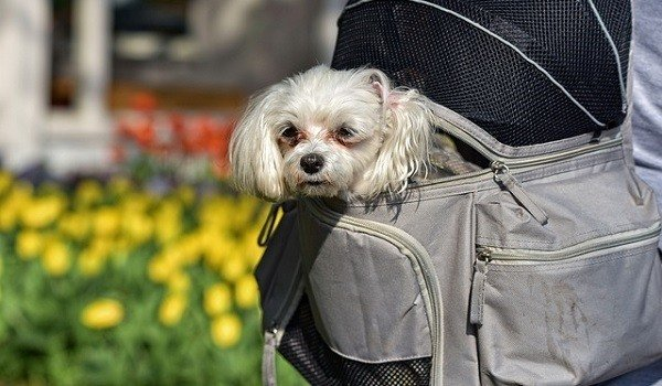 What's The Best Backpack Carrier For Dogs? 1