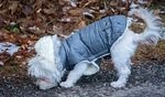 Waterproof Raincoats For Dogs - The Definitive Guide (2020) 5