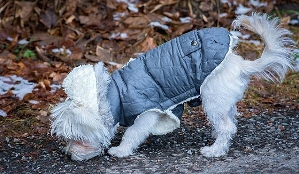 Waterproof Raincoats For Dogs - The Definitive Guide (2020) 1