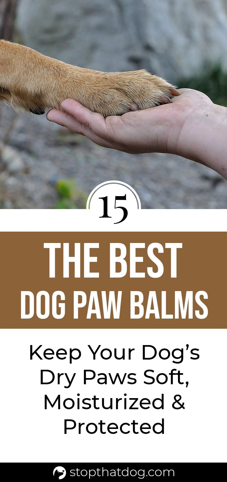 What's The Best Dog Paw Balm? Our Detailed Review (2020)