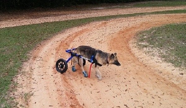 The Best Dog Wheelchairs For Small, Medium, & Large Breeds Reviewed (2020) 14