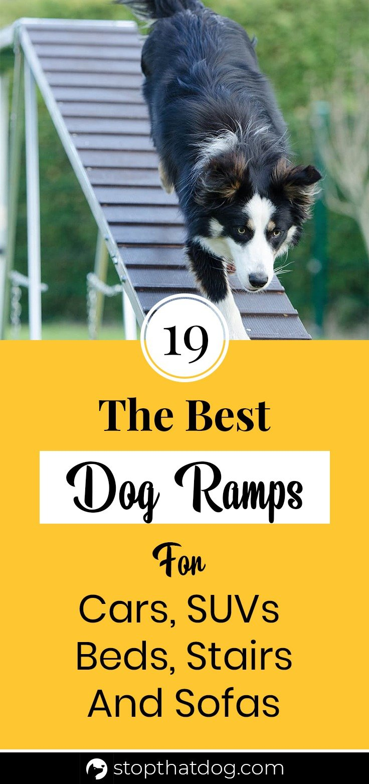 What Are The Best Dog Ramps In 2020?