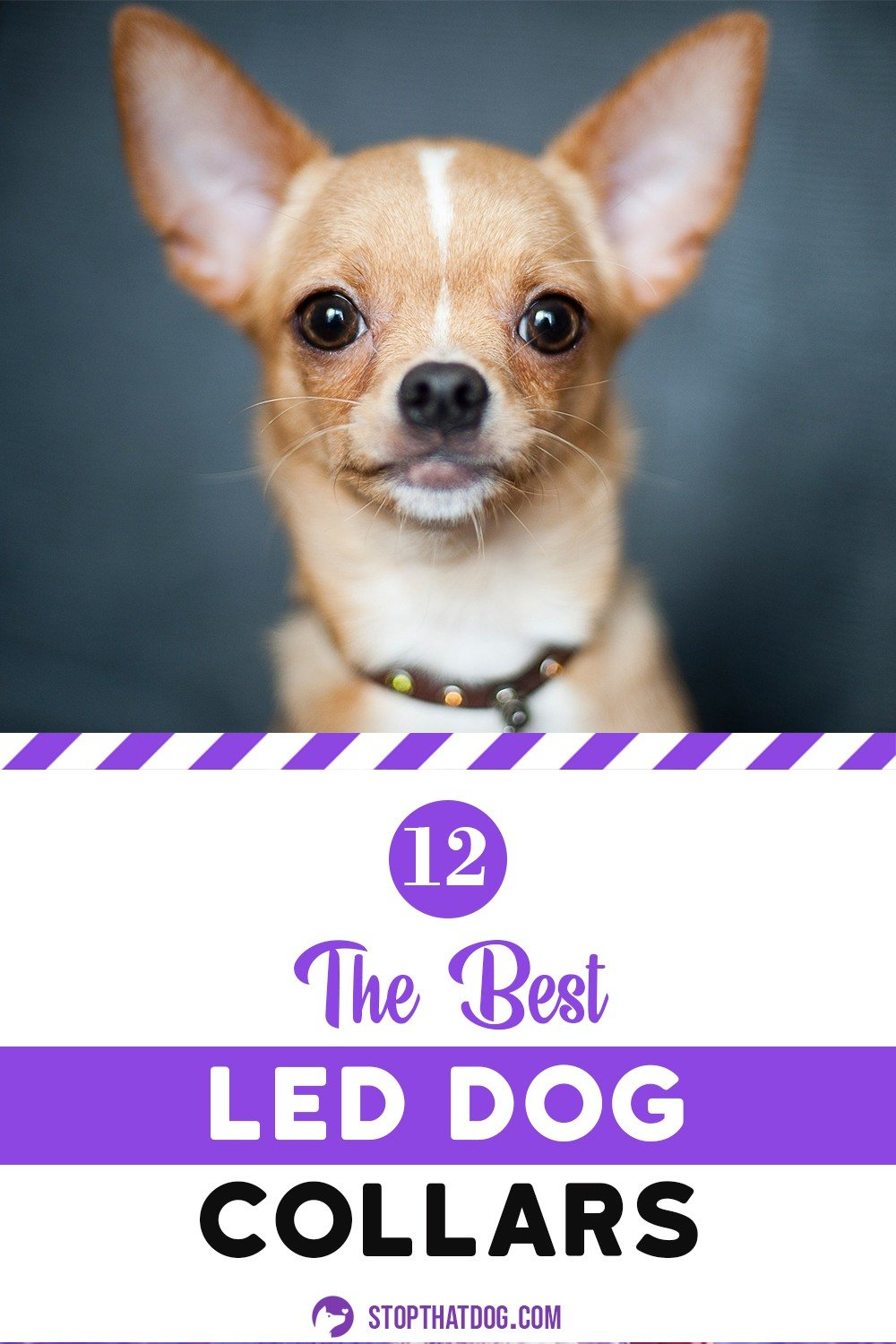 The Best LED Dog Collars - Our In-Depth Guide (2020)
