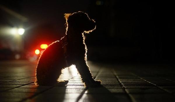 The Best LED Dog Collars - Our In-Depth Guide (2020) 1