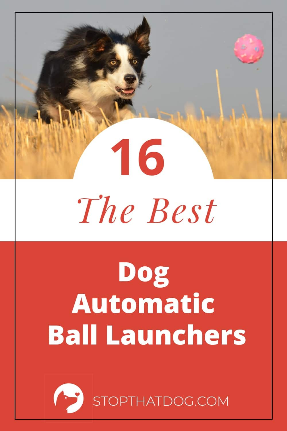 Dog Automatic Ball Launchers - A Fun Way To Keep Your Dog Active
