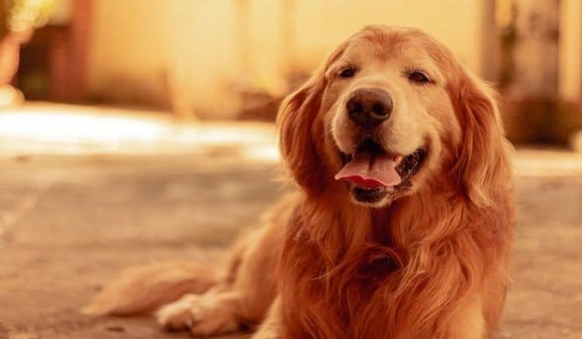 Melatonin For Dogs An In Depth Guide